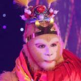 美猴王模仿