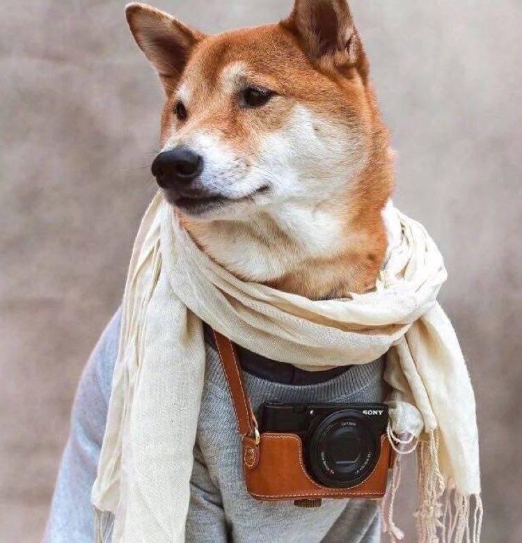 陈皮皮的相机